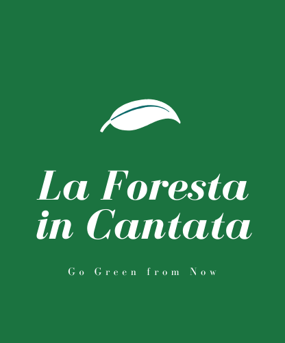 La Foresta Incantata Design